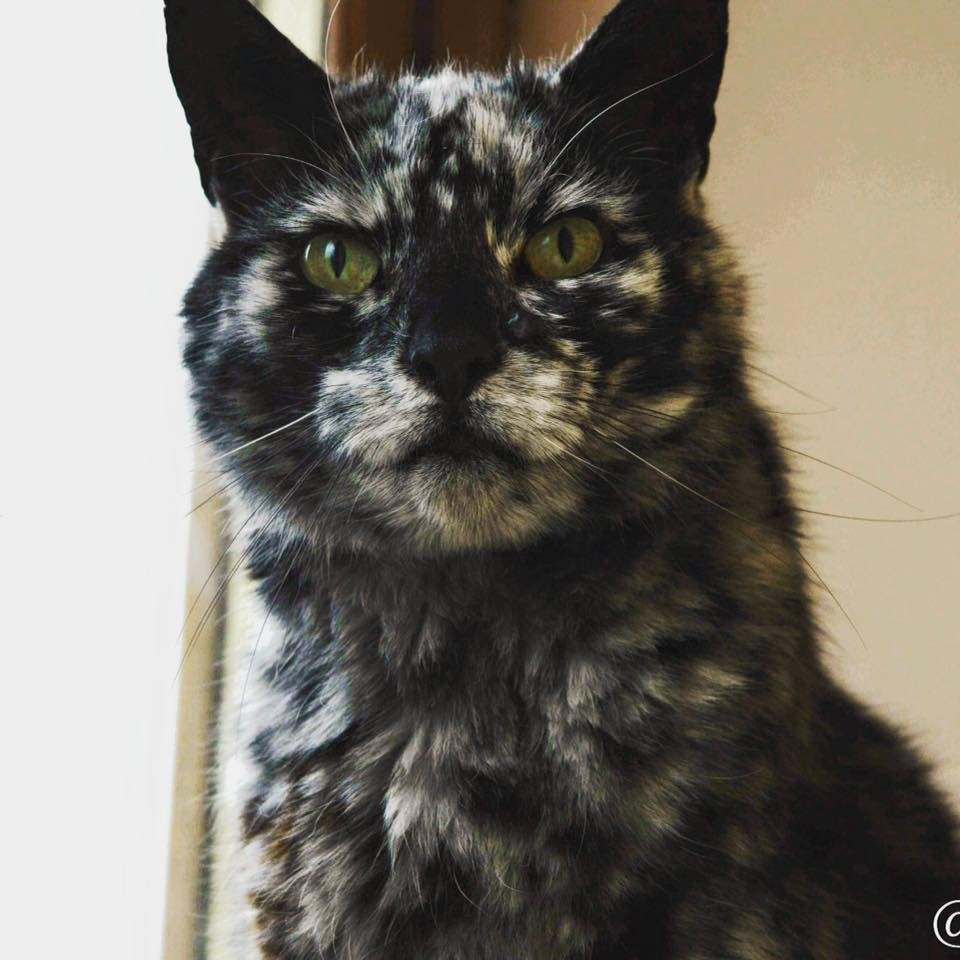 19yearold cat starts transforming his black coat into a