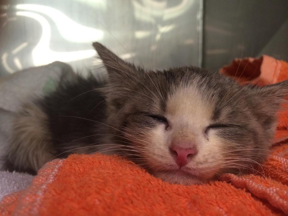 muddy kitten