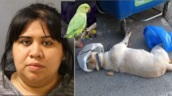 woman forces bird on dog