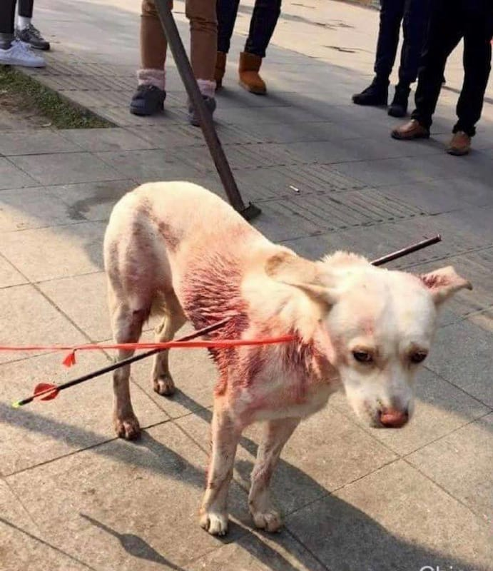 dog shot with two arrows