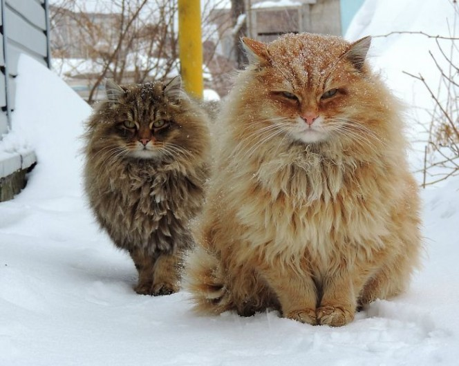 fluffy animals