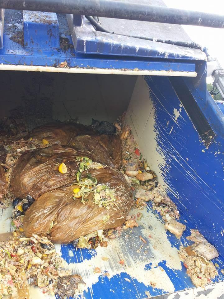 Garbagemen Found A Dying Kitten Dumped Inside Their Truck