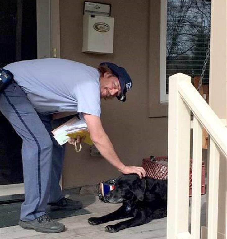 dog and postman