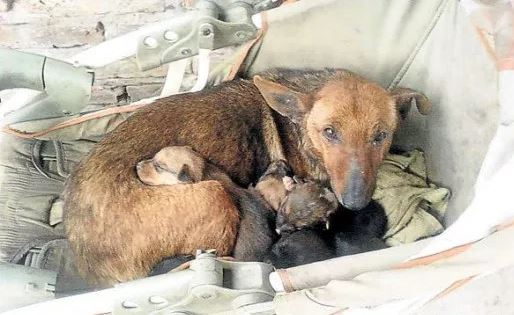 Stray Dog Finds An Abandoned Human Baby And Her Maternal