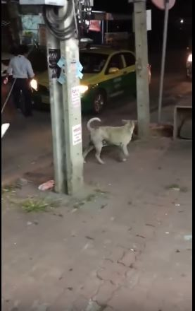 stray dog on the street