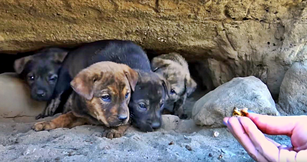 abandoned puppies