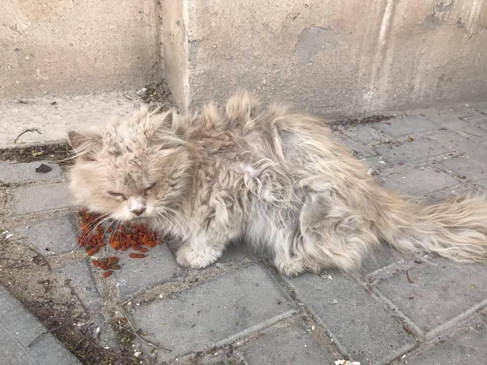 Hungry And Homeless Cat Rescue