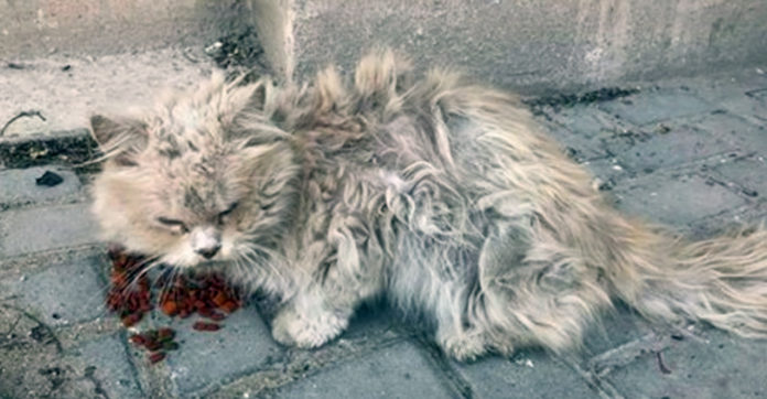 Getting Matted Fur Out Of Cat