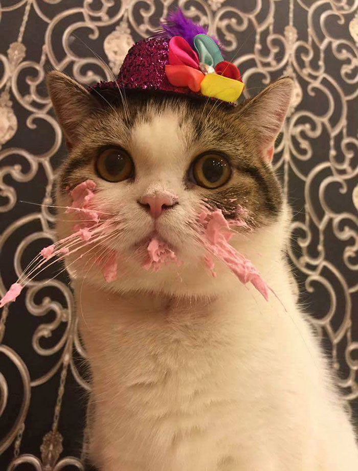 cat and birthday cake