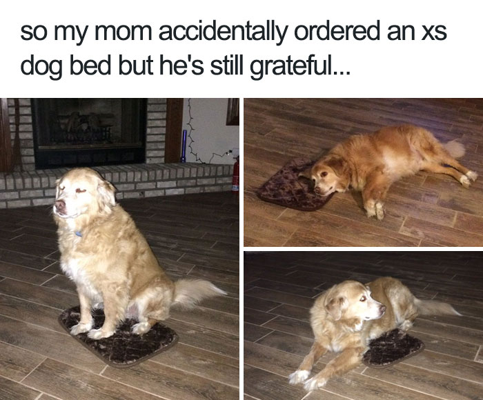 10 Of The Happiest Animal Memes To Start Your Day With A