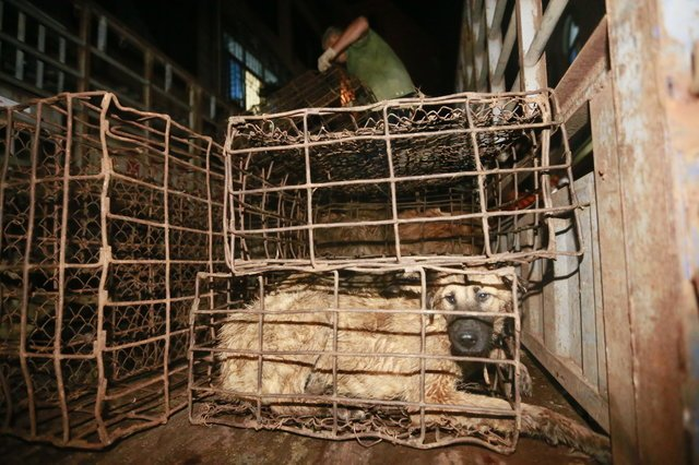 dog meat banned