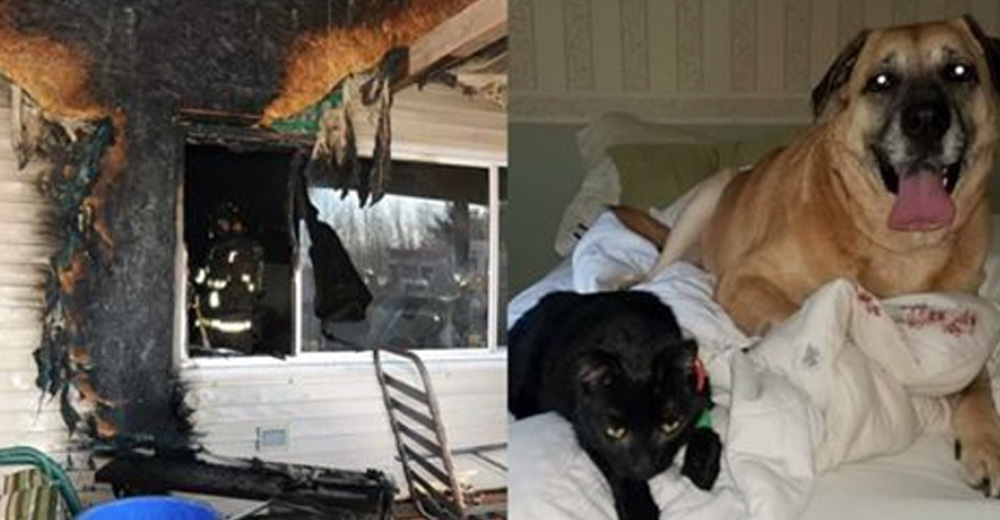 Missing Cat After House Fire Was Found 2 Months Later By Family Dog