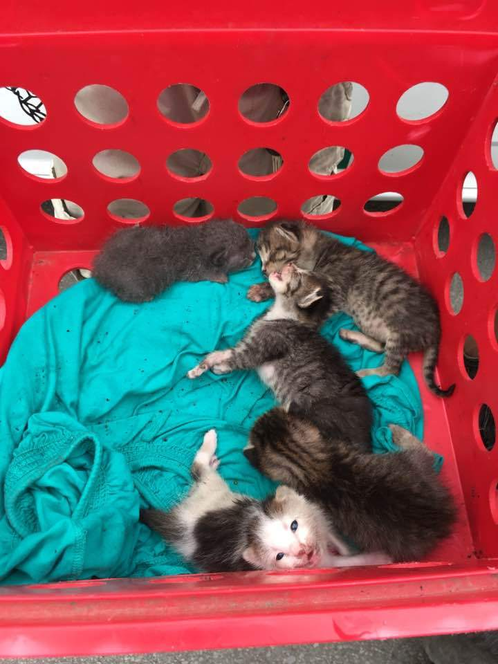 kittens euthanized