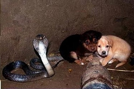 puppies in snake pit