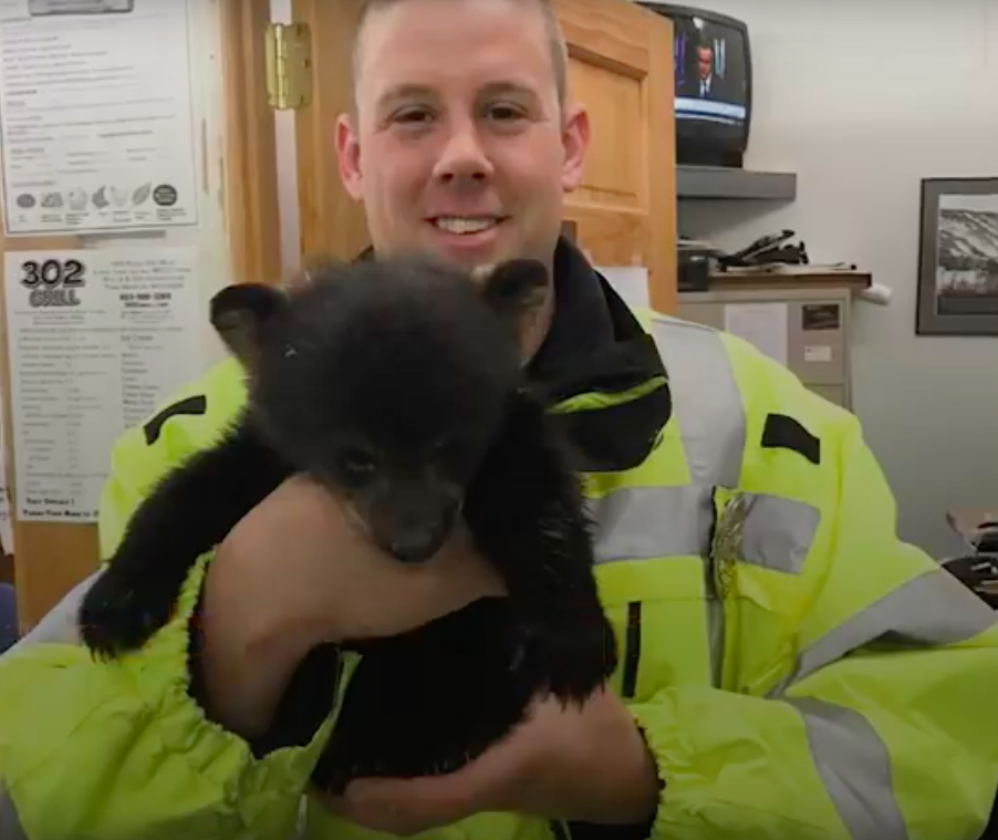 cops rescue bear cub
