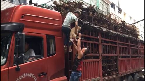 people save dogs