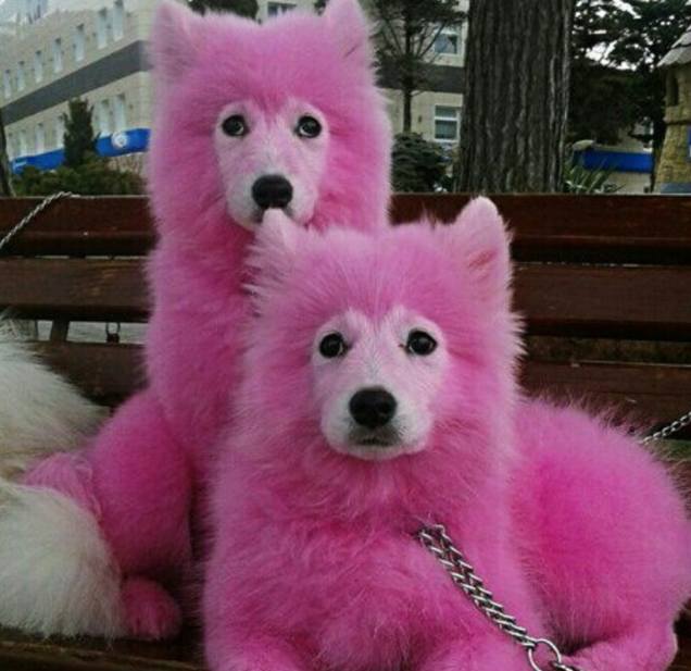 Monster Abused These Puppies Dyed Them Pink And Left Them