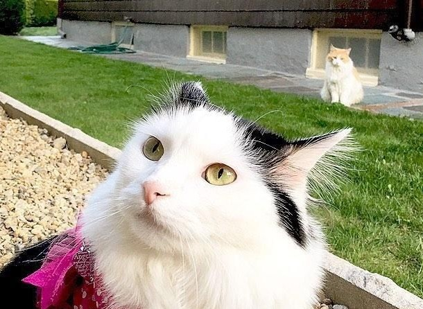 cat falls in love