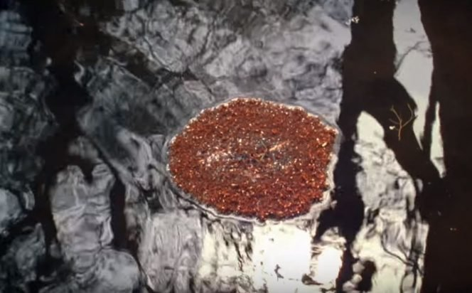 fire ants and water
