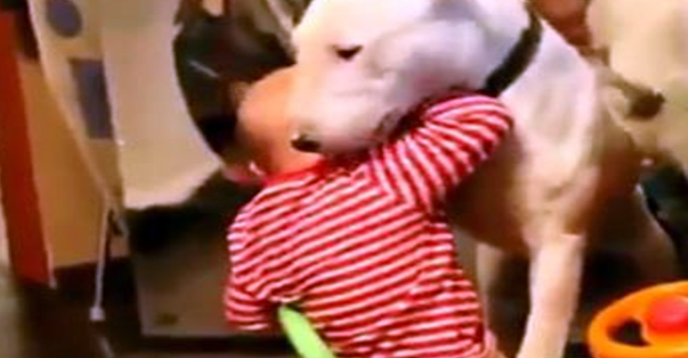 Video Of Pet Dog And His Response After Getting Slapped By Baby Goes Viral