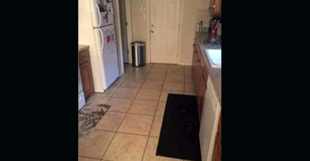 Can You Spot Dog Hiding In The Kitchen