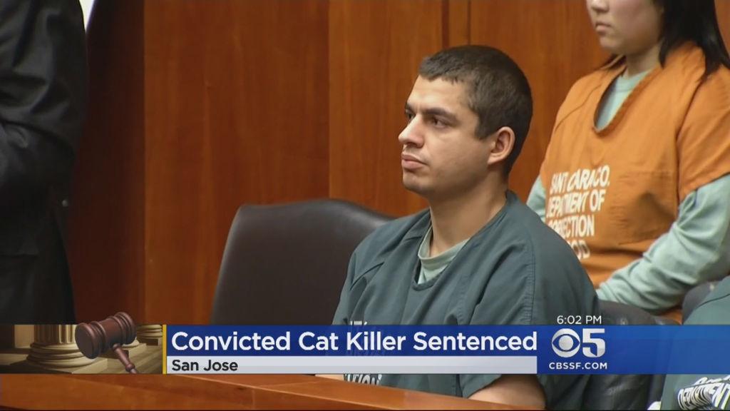 man tortures cats
