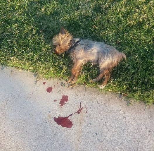neighbor killed dog
