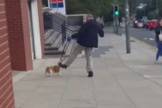 man kicking dog