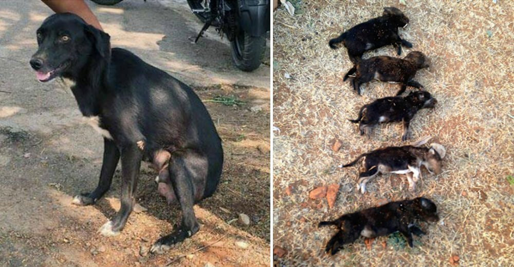 "Woman Kills 8 Puppies In Front Of Their Mother ""To Teach Her A Lesson"""