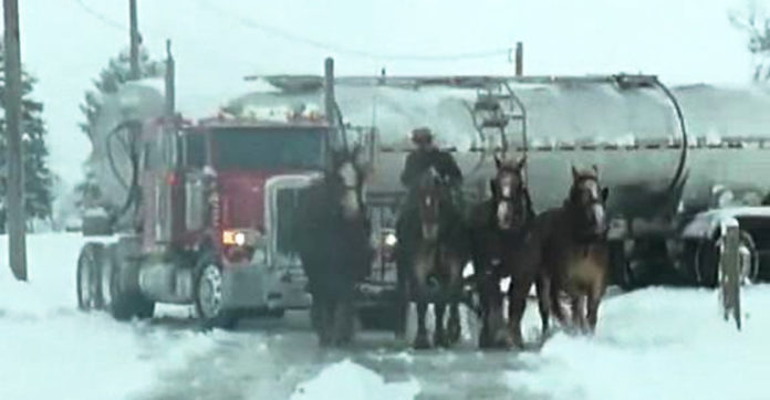 Massive Truck Got Stuck In Snow  Then A Team Of Clydesdale