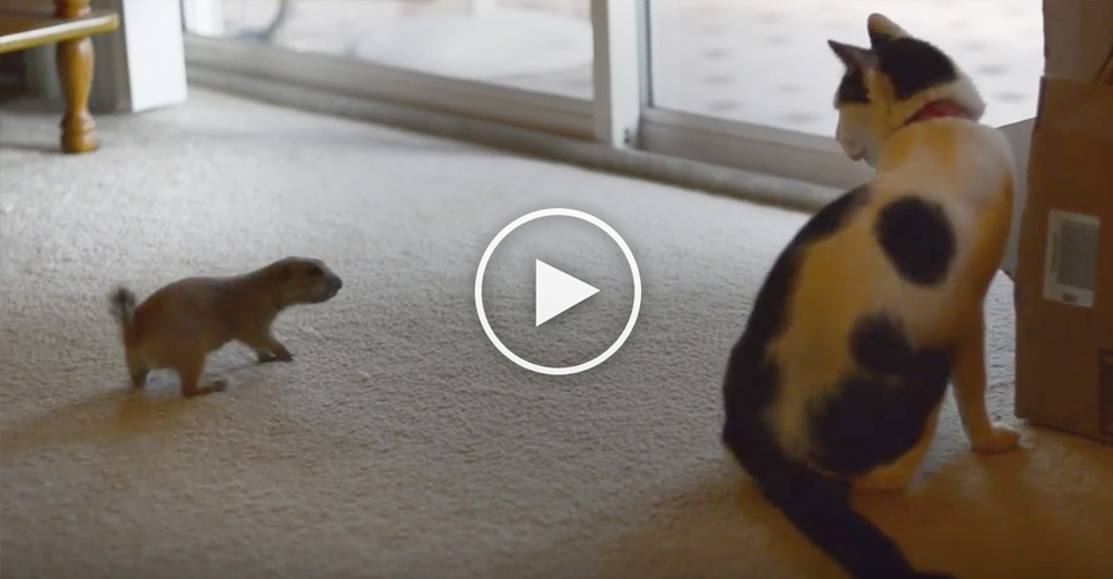 They Bring Home A Prairie Dog And Introduce Their Cat. But They Weren't Prepared For This