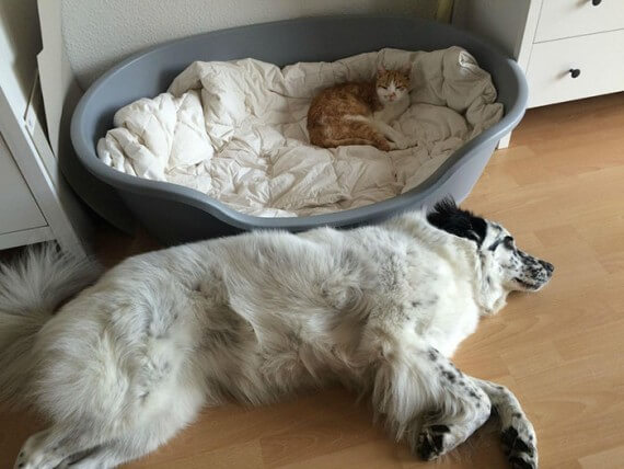 cats on dog beds