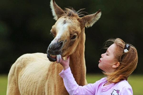 animals with down syndrome