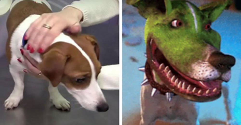 Woman Demands Her Dog Get Plastic Surgery To Look Like The