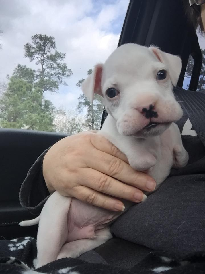 rescued puppy