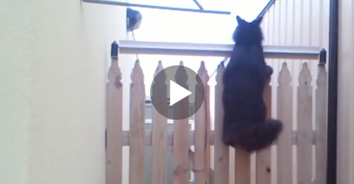Their Cat Kept Jumping Over The Fence So They Came Up With ...