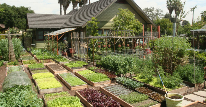 Family Grow All The Food They Need In Their Urban Home's ... on Farmhouse Backyard Patio id=58509