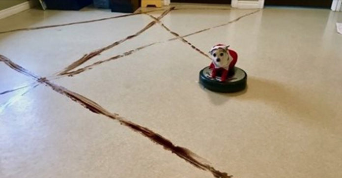 What Happens When Your Dog Poops Then Finds The Roomba