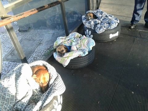 dogs in beds