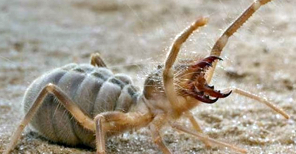 Scariest looking spider - photo#47