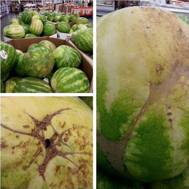 picking the right watermelon
