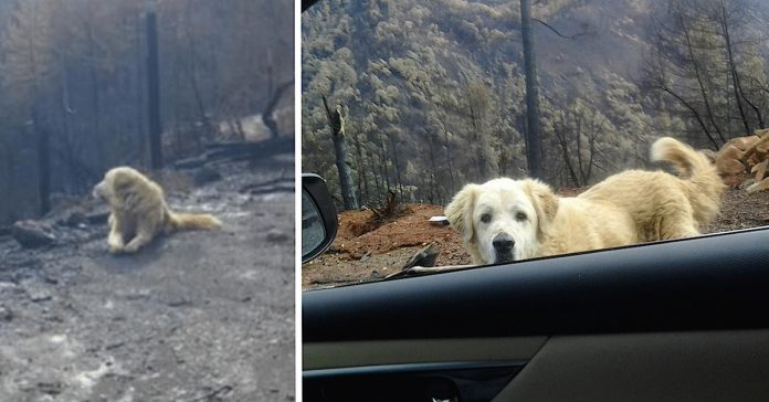 dog waits weeks fire