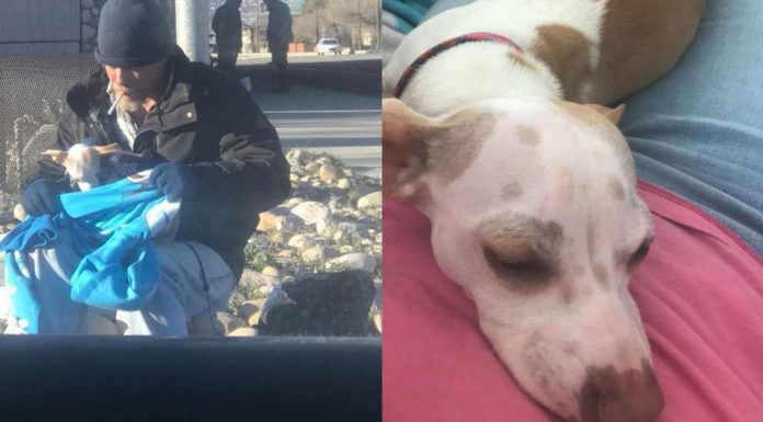 homeless man Ron Howell saves dog