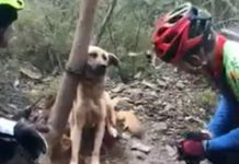 dog found tightly tied to a tree
