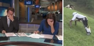 news anchors laughter goat man story