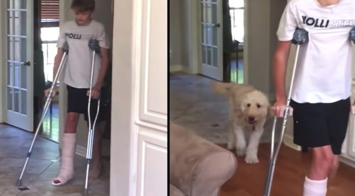 dog mocking brother walk