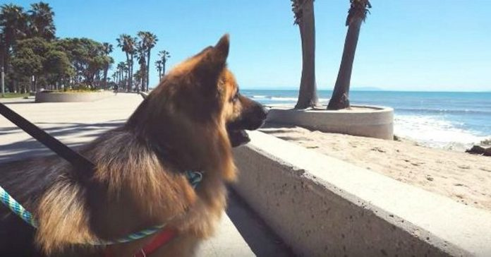 dog sees the ocean for the first time