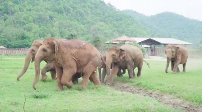 elephants greet rescued baby
