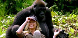 gorilla steals baseball cap