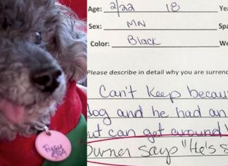 owner surrenders dog stupid
